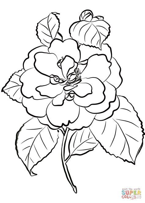 camellia flower coloring page camellia flower coloring page free printable coloring pages