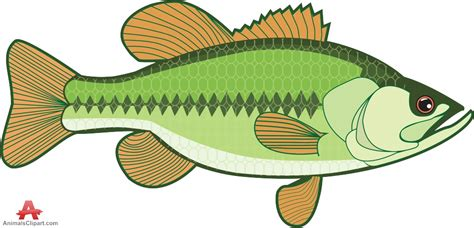 bass clip fishing clipart bass fishing pencil and in color fishing
