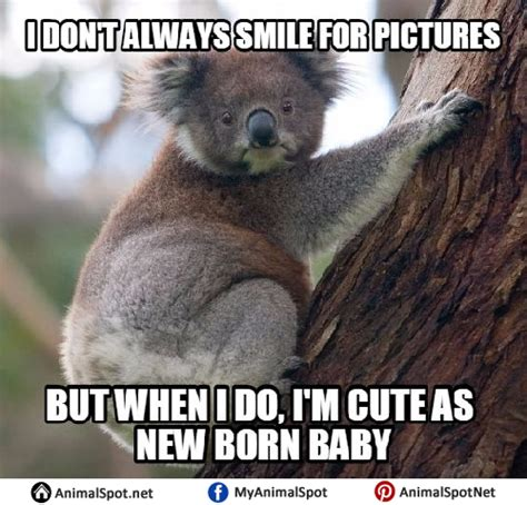 Koala Bear Meme - angry koala bear meme www imgkid com the image kid has it