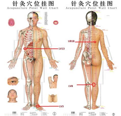 atlas of acupuncture points chiro blog archives call to schedule an appointment 818 831 0100
