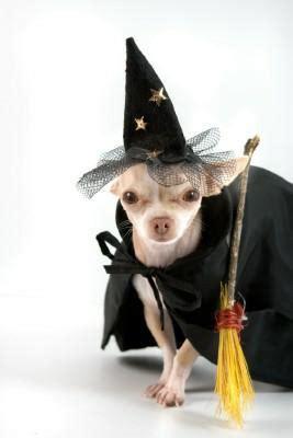 paso robles halloween pet costume contest