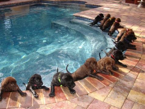 puppies swimming fourteen puppies that don t like swimming