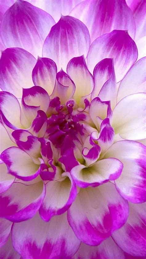flower wallpapers  android mobile    lg