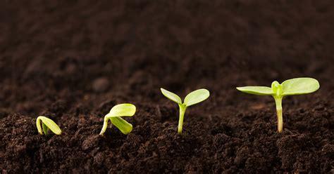 bis wann kann bã ume pflanzen gartentipps im februar 7 pflanzen f 252 r den start gr 252 223 gott