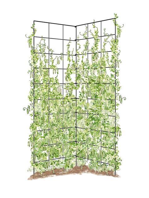 Folding Metal Trellis 1000 Ideas About Garden Trellis On Trellis