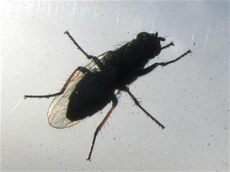 mücken wohnung k 252 che kleine fliegen k 252 che kleine fliegen k 252 che kleine