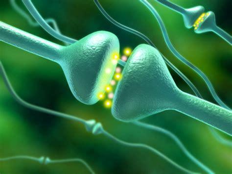 Serotonin Also Search For Serotonin Antidepressant Information