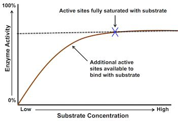 Concentration C Research Paper by Buy Research Paper The Effect Of Activator