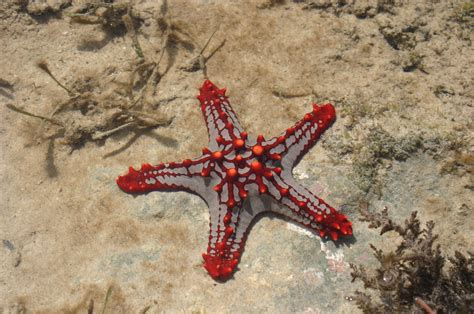 Website Of The Week Starfish by 10 Facinating Photos Of Starfish Website Design
