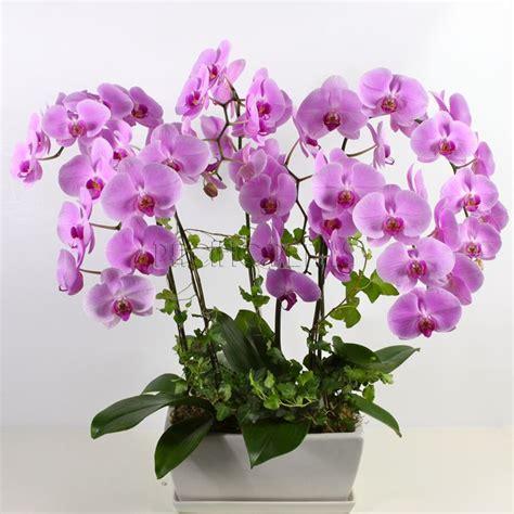 vaso orchidee vasi per orchidee vasi per piante tipologie di vaso