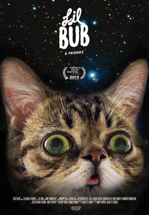Lil Bub Meme - lil bub friendz premieres at tribeca vice united states