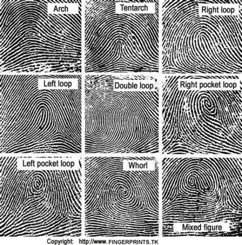 pattern evidence in forensic science a survey of biometrics security systems