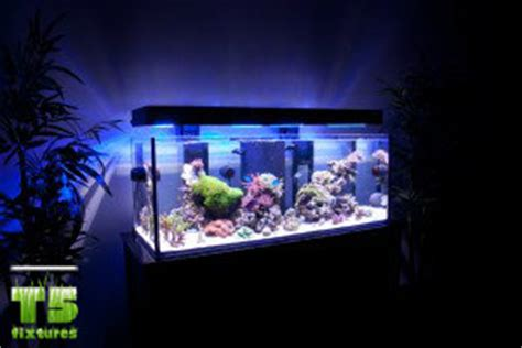 Is Lighting The Reef Tank With Fluorescent Lighting | best aquarium lights t5 fluorescent lights t5 grow