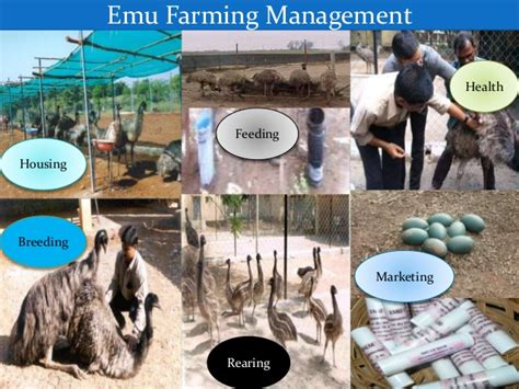 emu housing emu farming in india an emerging enterprise