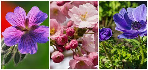 foto ci di fiori immagini di fiori donna moderna