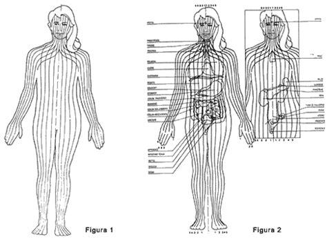organi interni corpo umano lato destro la riflessologia plantare il piede visto dal