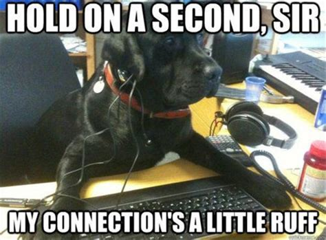Funny Meme Captions - 30 funny animal captions part 9 30 pics amazing