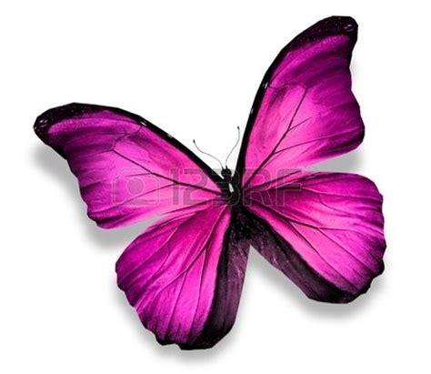imagenes mariposas rosas reales 17 mejores ideas sobre tatuajes de pajarita rosa en