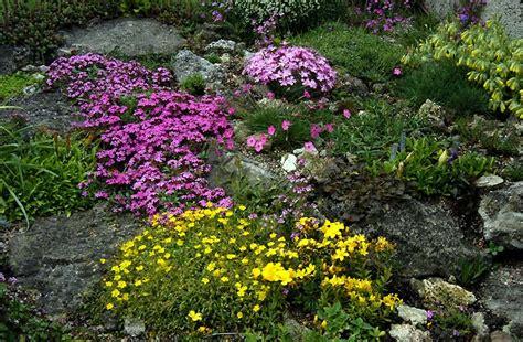 Best Plants For Rock Gardens Rock Garden Ideas Flower Photograph Rock Garden Is An Idea