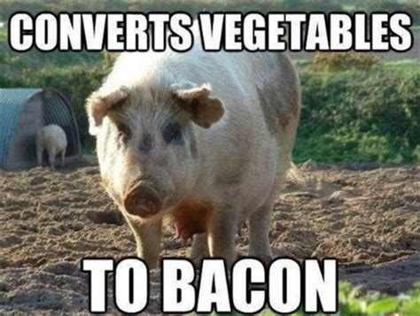 Funny Pig Memes - turns vegetables into bacon funny pigs dump a day