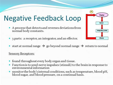 positive and negative feedback loops in wiring