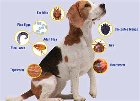 Can Animals Cure Us No 3 diseases prevention and treatment pictures of dogs and all about