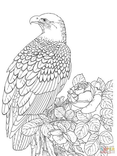 301 Moved Permanently Bald Eagle Coloring Pages