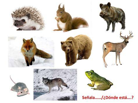 imagenes animales que viven en el bosque vamos a aprender los animales del bosque youtube