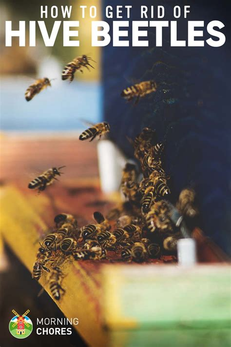how to get rid of wasps in backyard how to get rid of bees in backyard 28 images how to