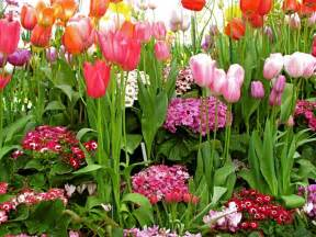 Spring Flowers Pictures Lila Daley S Musings Spring Is Coming