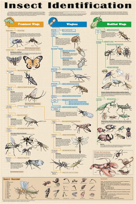 garden pest identification best 25 insect identification ideas on insect