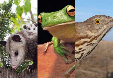 imagenes de animales endemicos los 20 animales end 233 micos de m 233 xico m 225 s comunes lifeder