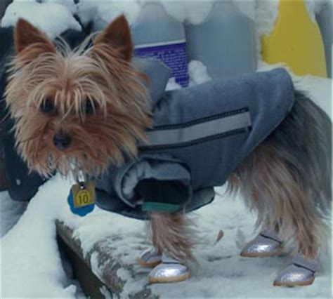 boots for yorkies winter boots are essential in cold climates