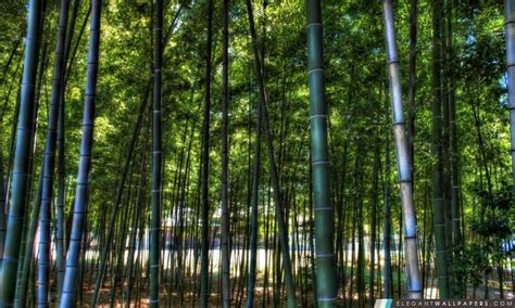 Elegant Wall Murals dans la for 234 t de bambou fond d 233 cran hd 224 t 233 l 233 charger