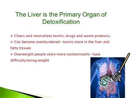 Shaklee 7 Day Detox by Shaklee 5 Day Detox Easy To Follow Daily Plan To A
