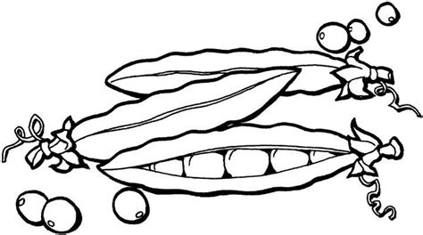 Fruits and vegetables coloring pages   Crafts and