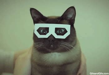 wallpaper cat 3d glasses 3d glasses on tumblr