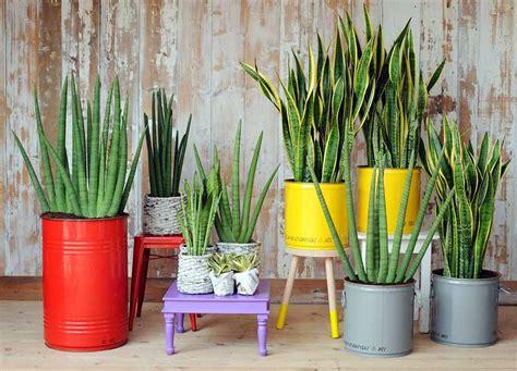 decoracion de interiores con plantas y flores decoraci 243 n de interiores con plantas naturales y sus
