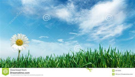 bloemen en wolken bloem met gras en wolken stock foto afbeelding bestaande