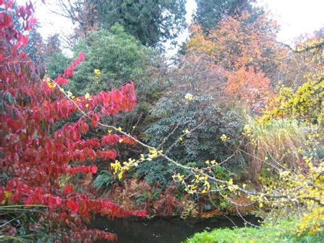 Where To Find Autumn Foliage In Victoria And Vancouver Botanical Gardens Ubc