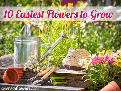 10 easiest flowers to grow pollennation