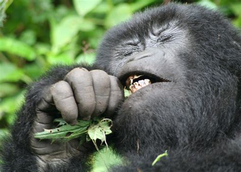 ultimate primate experience itinerary audley travel