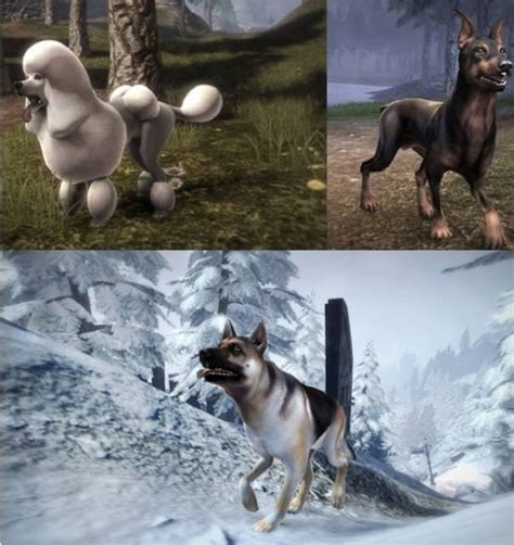 setter dog fable 3 fable iii dlc giant bomb