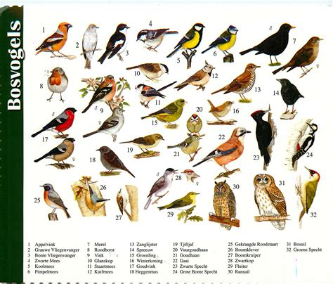 names of birds los libros resumidos de resumelibros tk