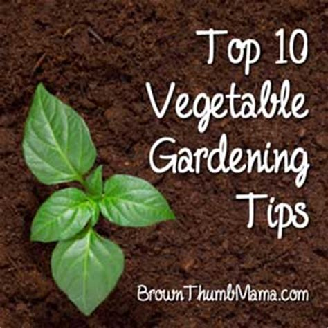 top 10 vegetable gardening tips brown thumb mama