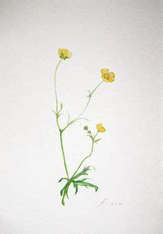 buttercup tattoo designs hugo guinness derian 1 wildflower