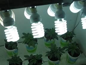 cannabis gold the best use of marijuana grow lights