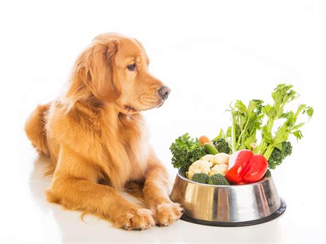 top puppy food how to choose the best food