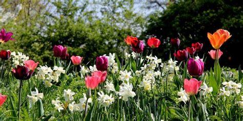 fiori bulbi primaverili bulbi primaverili piantiamoli adesso cose di casa