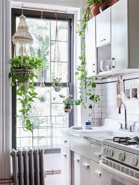 plantes cuisine un appartement cosy 224 blueberry home